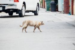 A Cat is Walking in the village's street