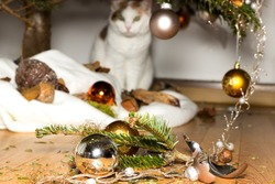 A cat looks innocent at broken christmas decoration