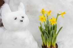 A cat made of snow and live, yellow daffodils in a pot. Spring concept