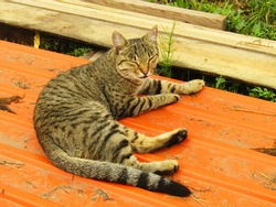 A cat named Musya likes to lie in the sun and bask, and most of all she likes to catch wild field mice