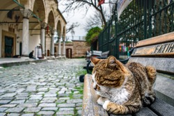A cat near the Mosque in Istanbul