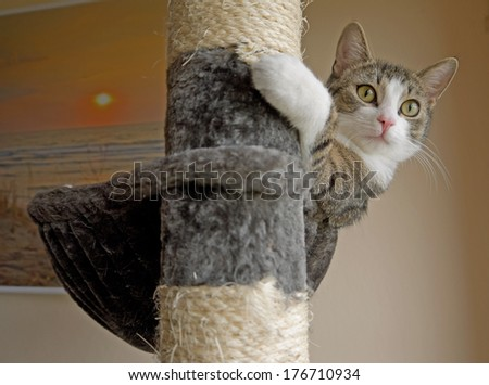 A cat on a scratching post.