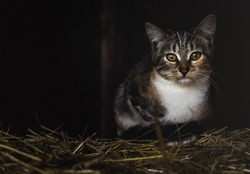 a cat on a straw with dark background