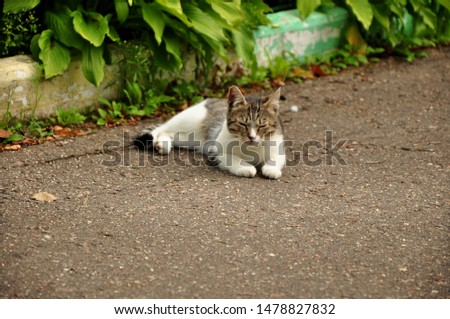 A cat or Domestic cat is a domestic animal, a mammal of the feline order predatory family. #1478827832