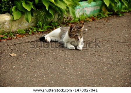 A cat or Domestic cat is a domestic animal, a mammal of the feline order predatory family. #1478827841