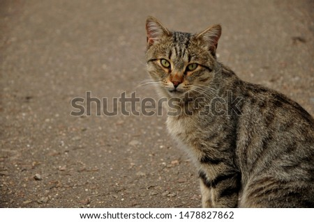 A cat or Domestic cat is a domestic animal, a mammal of the feline order predatory family. #1478827862