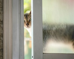 A cat peers through a slightly ajar sliding window, possibly attempting to sneak inside the house.