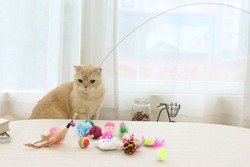 a cat playing with toys