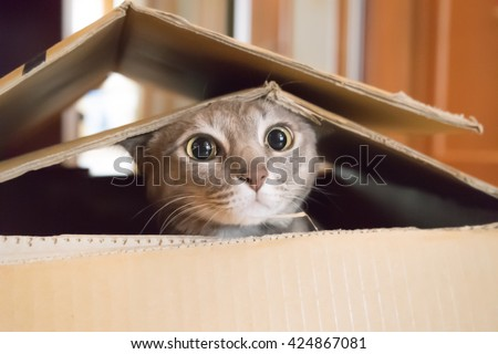 Shutterstock A cat plays hide and seek in a cardboard box