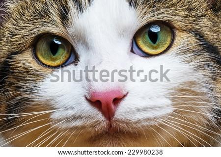 a cat portrait close up #229980238