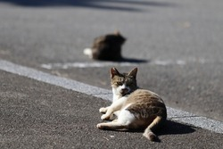 A cat relaxing in the parking lot.