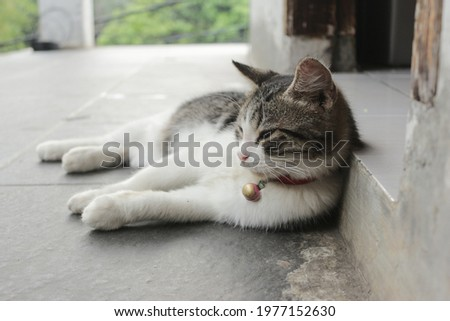 a cat relaxing itself on the floor  Stock foto ©