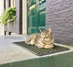 A cat sat on a mat. A brown tabby cat sitting on a mat outside the front door.