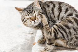 A cat scratching itself