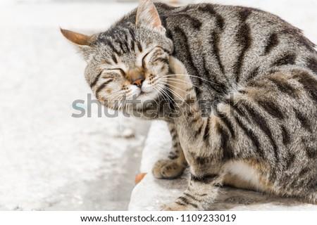 A cat scratching itself #1109233019