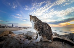 A cat sits on rocks in the background at sunset in Surfers beach in Ashdod