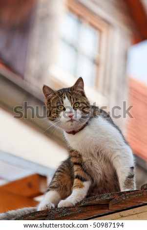 A cat sitting on a rooftop, waiting