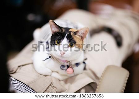 A cat sitting on a woman's lap  Zdjęcia stock ©