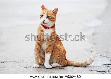 a cat sitting on the street with patience - stock photo