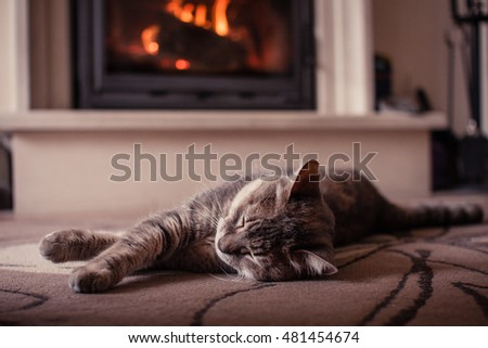 A cat sleeping comfortably in front of the fireplace.