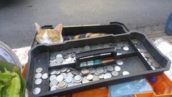 A cat sleeping in cash box at the fresh market.Bangkok, Thailand.