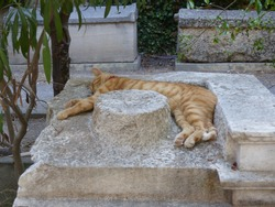 A cat sleeping on a column