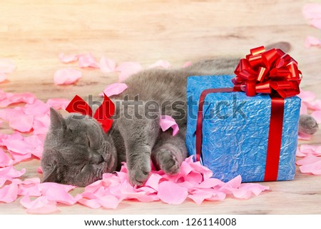 A cat sleeping on the rose petals near a gift with a red ribbon with big bow