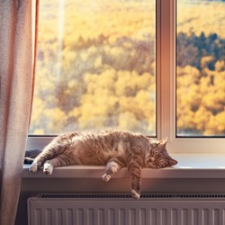 A cat sleeps by a window with yellow trees in an autumn forest. Concept of home isolation due to the coronavirus pandemic