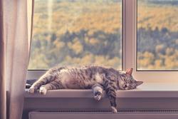 A cat sleeps by the window with an orange autumn forest, close-up. Quarantine because of the epidemic of the coronavirus, concept