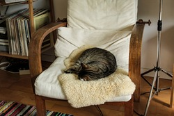 A cat sleeps curled up in a chair.