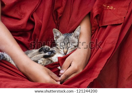 A cat sleeps on a novice's lap