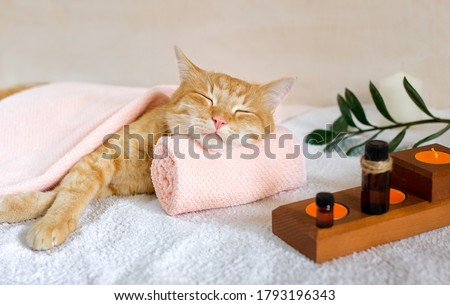 A cat sleeps resting his head on a towel on a massage table while taking spa treatments, massage oil, relax ストックフォト ©