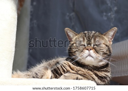 A cat that feels the outside wind and takes a deep breath.