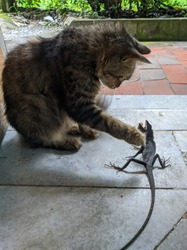 A cat that stabbed a chameleon that was hunted