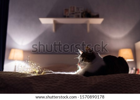 A cat with a christmas garland laying and sleeping on a sofa in a dark bedroom with cosy light. A cosy evening and cosy home concept. Cat portrait. Good night concept. #1570890178