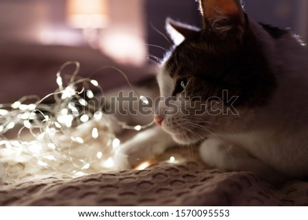 A cat with a christmas garland on a sofa in a dark room with cosy light. A cosy evening and cosy home concept. Cat portrait. Good night concept. #1570095553
