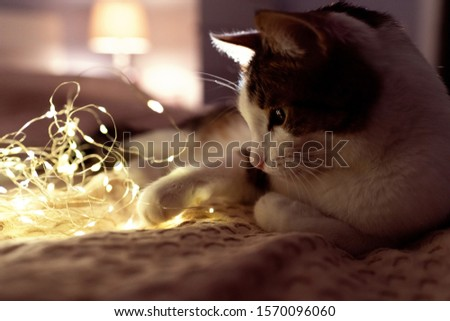 A cat with a christmas garland on a sofa in a dark room with cosy light. A cosy evening and cosy home concept. Cat portrait. Good night concept. #1570096060