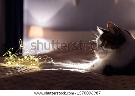 A cat with a christmas garland on a sofa in a dark room with cosy light. A cosy evening and cosy home concept. Cat portrait. Good night concept. #1570096987
