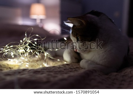 A cat with a christmas garland on a sofa in a dark room with cosy light. A cosy evening and cosy home concept. Cat portrait. Good night concept. #1570891054