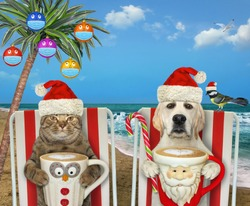 A cat with a dog is sitting on a beach chair and drinking coffee under a palm tree decorated with Christmas balls with protective masks.