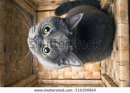 a cat with a large yellow eyes sitting in the box and looks up