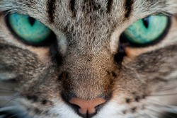 A cat with green eyes close-up
