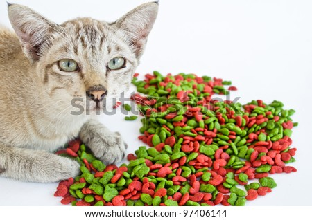 a cat with his food