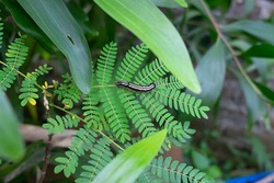 a caterpillar crawling on the leaves