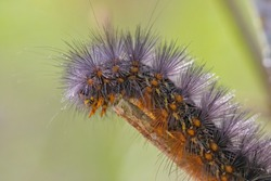 A caterpillar is the  worm like insect.To become a butterfly, a caterpillar first digests itself. But certain groups of cells survive, turning the soup into eyes, wings, antennae and other.