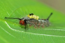 A caterpillar on leaf in nature