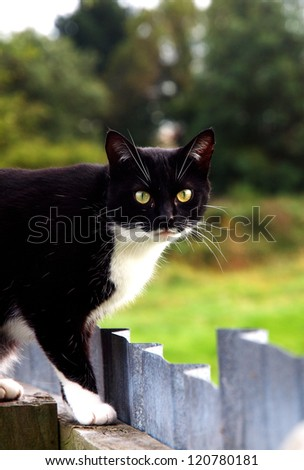 A cats world - stock photo