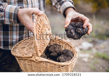 A caucasian man shows some black truffles recently recollected in a basket.. Сток-фото ©