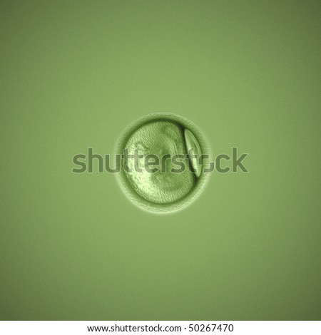 a cell under the microscope - stock photo