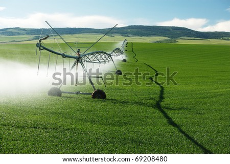 A center pivot sprinkler system watering a grain field.